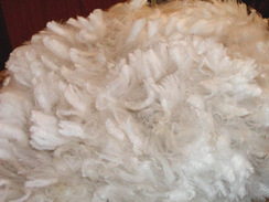 Photo of Beautiful Prime Fleeces