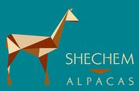 Shechem Alpacas - Logo