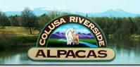 Colusa Riverside Alpacas - Logo