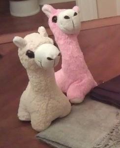 Photo of Alpaca Buddies