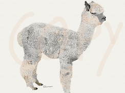 Photo of Alpaca sketch