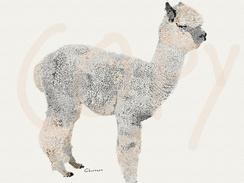 Photo of Alpaca sketch