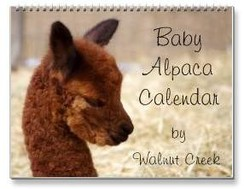 Photo of Alpaca Baby Calendar 2014