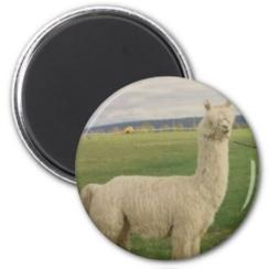 Photo of Alpaca Magnet