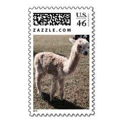 Photo of Alpaca Stamp 5