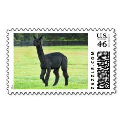 Photo of Alpaca Stamp 11
