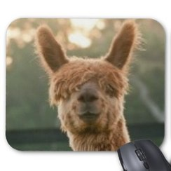 Photo of Alpaca Smiling Mouse Pad