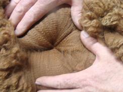 Photo of Baby Alpaca Blanket Fiber Prime 3 ounces