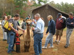 Alpacas always generate curiosity from young to old!