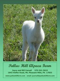 Pallas Hill Alpaca Farm - Logo
