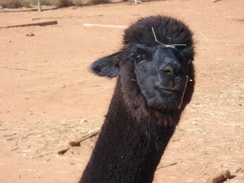 Photo of Adopt-A-Paca – Expresso