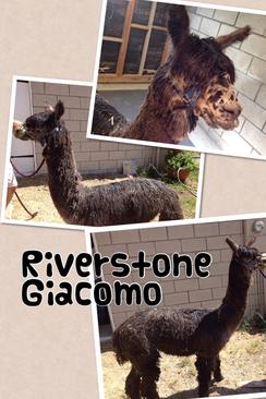 Riverstone Giacomo Trabalza of Peru