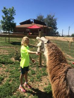 Photo of Alpaca Summer Camps!