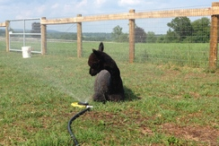 Photo of Alpaca Agisting and Boarding