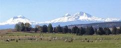 Cascade Mountain Views