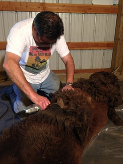 Shearing Services