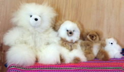 Photo of Teddy Bears