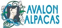 Avalon Alpacas - Logo