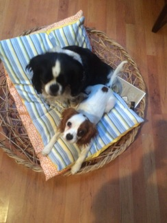 Photo of Pet bed with basket