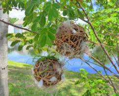 Photo of Bird Nesting Material
