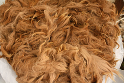 Photo of Raw Fiber For Sale - Justice