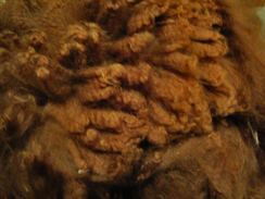 Photo of Alpaca Fiber Brown 1 Lb. Superfine