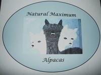 Natural Maximum Alpacas - Logo