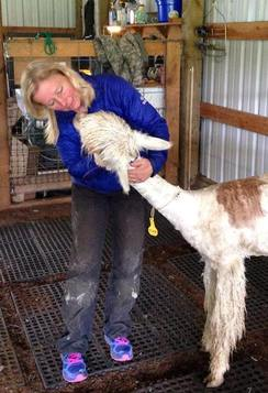 after my 1st shorn alpaca during the seminar in Oregon
