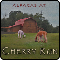 Alpacas at Cherry Run - Logo