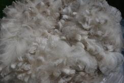 Photo of Fleece - white