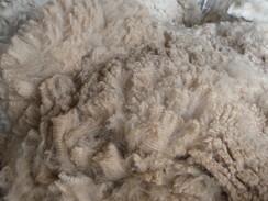 Photo of Fleece skirting