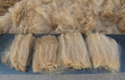 Photo of Raw Washed Medium Fawn Fiber SOLD