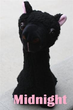 Photo of PacaBuddies Stuffed Toys