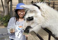 Feeding Einstein the Llama