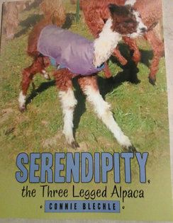 Photo of Serendipity the Three Legged Alpaca