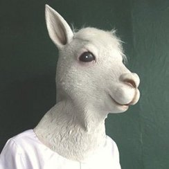 Photo of Alpaca Mask