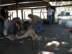 Shearing blanket