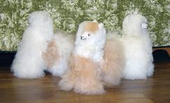 """Photo of Alpaca Fleece 12""""Alpacas-Includes Shpg"""