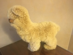 Photo of Huacaya Alpaca