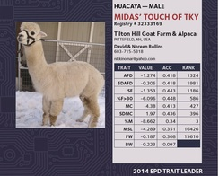 Photo of Alpaca Breeder