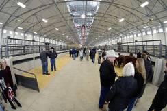 New Cattle Barn 2 Interior