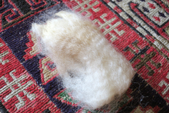 Photo of Raw White Alpaca Fiber from Allamanda