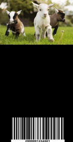 Photo of Morning G'Lori Farm Goat Milk Soap #1
