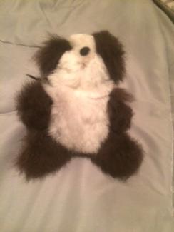 Photo of Mini Teddy Bear