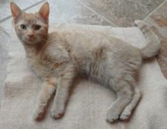 Photo of Alpaca Felted Cat Mat