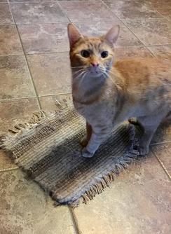 Photo of Alpaca Woven Cat Mat