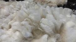Photo of White Raw Huacaya Alpaca Fiber