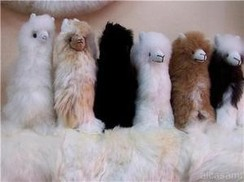 "Photo of 5.5"" real fibre stuffed toy Alpaca"