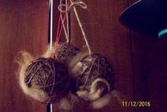 Photo of Nesting Ball