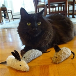 Photo of TOYS: Three BLIND Mice!
